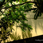 トリバンドラムの芦屋にあるお家と緑。