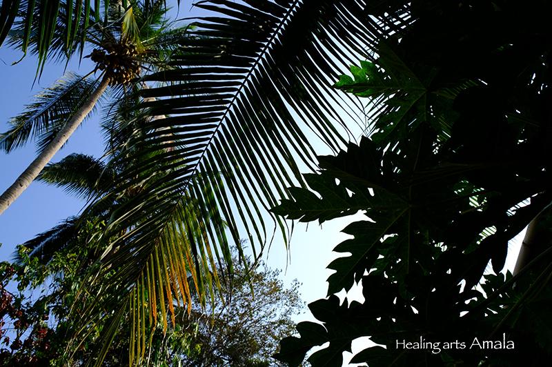 トリバンドラムの芦屋と椰子。