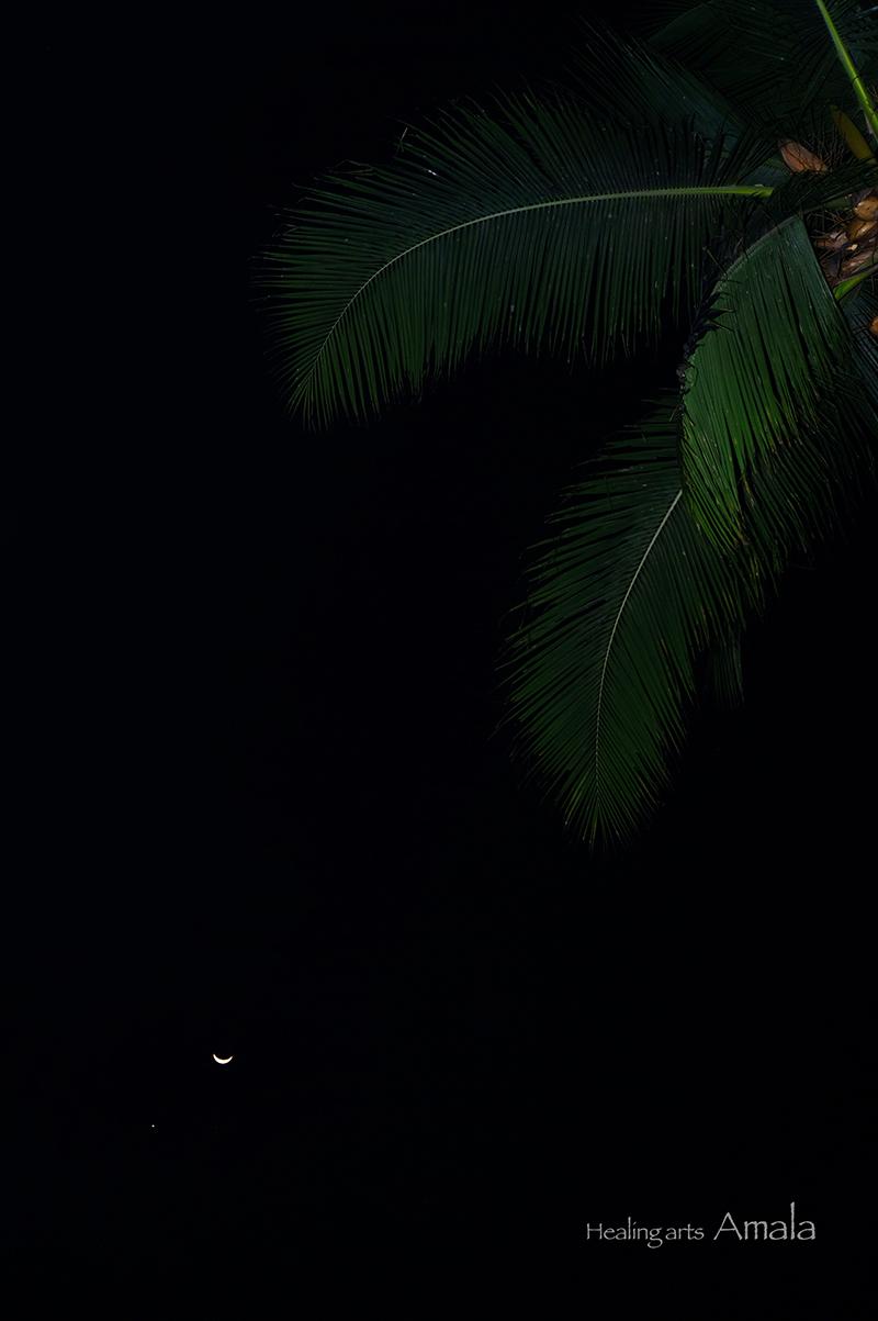 ケララ、三日月と金星と緑の羽と。