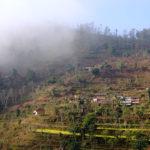 ネパール ダーディンの段々畑