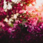 3月の定休日 花